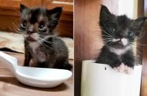 とっても小さかった子猫