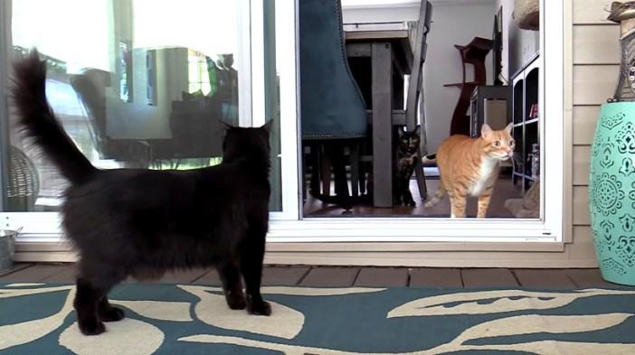 外に出た猫