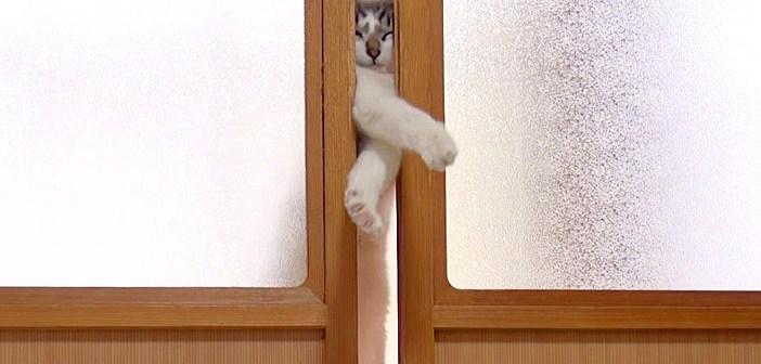 部屋に入りたい猫