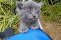 釣りの最中に現れた子猫