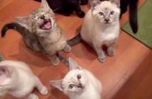 ご飯が欲しい子猫達
