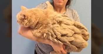 毛が伸びた猫