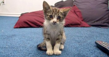 独りぼっちのところを保護された子猫
