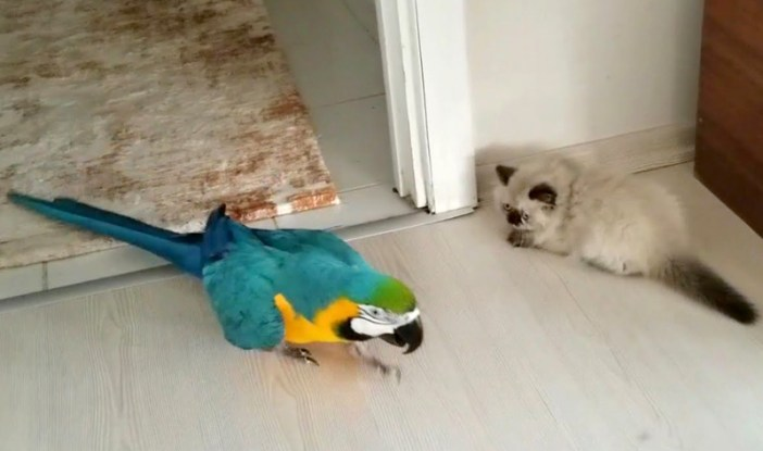 子猫とインコ