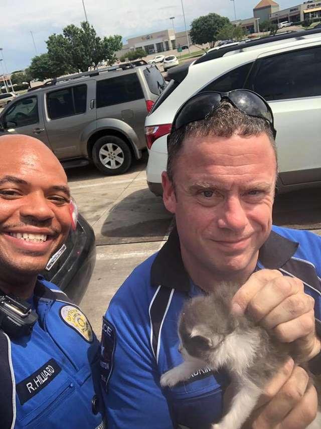 子猫と警察官