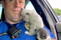 警察官と子猫