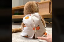 座る猫をポチッ