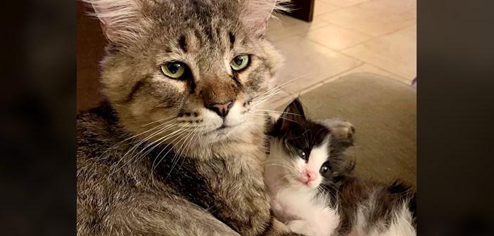 衰弱した状態で路上から保護された老猫。安全な家の中で命をつなぐと、迷子の子猫達を守るお父さんのような存在に