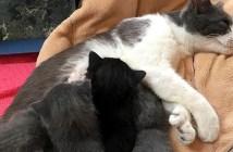 母猫と子猫達