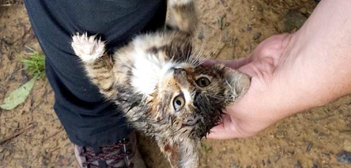 森の中で必死に足にしがみついてきた子猫。無事に保護され、家に向かう車の中で見せた幸せいっぱいの姿に心が温まる
