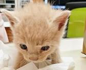 冷たい身体で衰弱していた子猫を保護し、新しい家族の元へ。1年ぶりに会いに行くと、幸せいっぱいの姿で迎えてくれた
