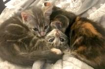 庭で保護された子猫達