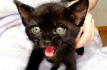 フミフミ子猫