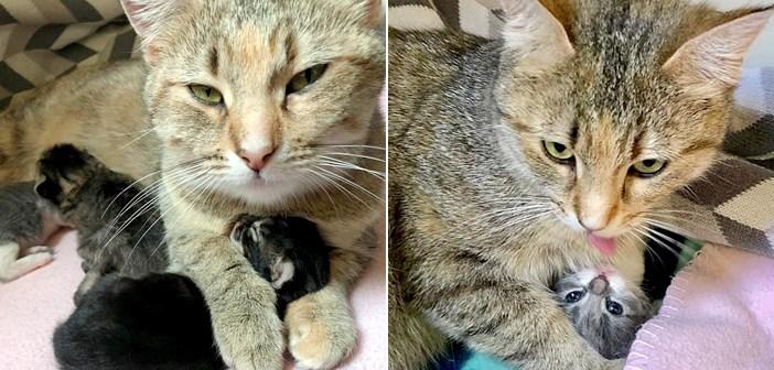お腹の赤ちゃんのために、人間に助けを求めてきた野良猫。安全な家の中での子育てに、大きな幸せを感じる (*´ェ`*)