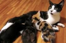 授乳中の母猫