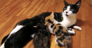 授乳中に「ハッ!」と何かを思い出し、突然歩き始めた母猫。その後に続く子猫達の姿がとっても可愛かった ( *´艸`)♡