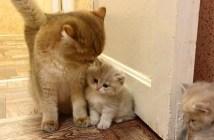 ピタッと寄り添う子猫