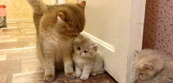 大好きなお母さんにピッタリと寄り添う子猫。どうしてもお母さんを独り占めしたかったようで、とっても可愛い行動に出た