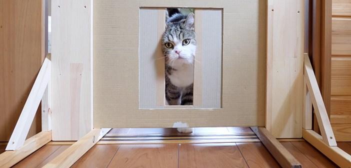『猫は頭が入れば通り抜けられる』という説を検証! どんどん狭くなっていく隙間に挑む姿がとっても可愛かった ( *´艸`)♡