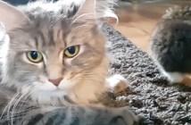 会話する母猫と子猫