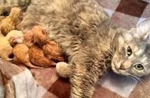 6匹の子猫達