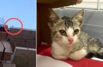 ビルの上の猫