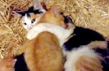 納屋の中の猫