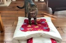 猫布団と猫
