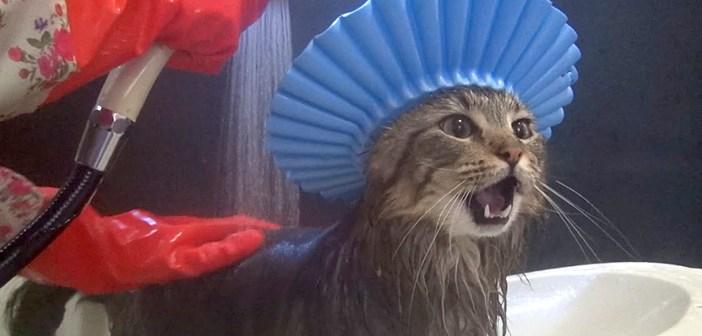 シャンプーハットと猫