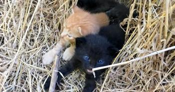 暑さの中から保護した子猫達