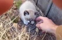 子猫を保護