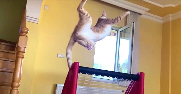 ゴールキーパーな猫さん