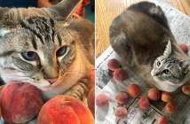 桃好きの猫