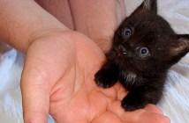 ドラキュラ城で助け出された子猫