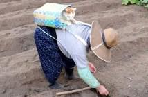 種まきと猫