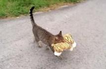 猫とヌイグルミ