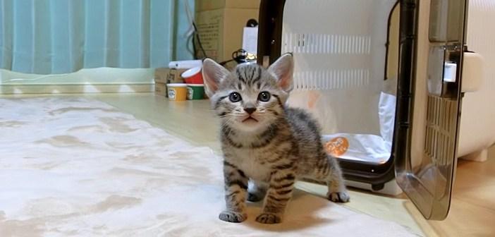 家にやって来た子猫