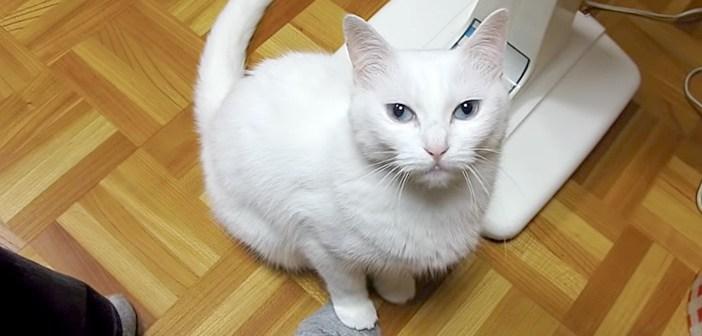 そっと踏むと、そっと踏み返してくる♪ 飼い主さんと猫さんのさりげない足の踏み合いっこがとっても面白かった ( *´艸`)♡