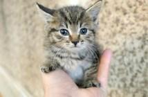 フレンドリーな子猫