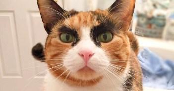 ごんぶと眉毛の猫さん