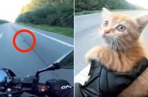 道路で保護された子猫