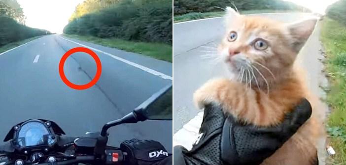 バイクの走行中に、車道でうずくまる子猫を発見した男性。向かってくる車を必死に制止しながら、幼い命を助け出す!