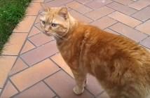 裏山から帰ってくる猫