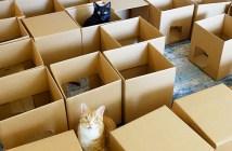 50個のダンボール箱と猫