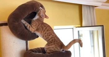持ち上げる猫
