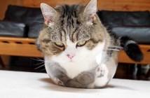 収まりきれない猫