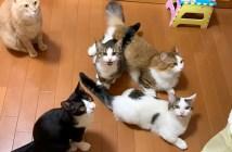 オヤツコールをする猫