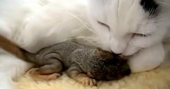 リスの赤ちゃんと猫
