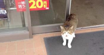 コンビニで出会った猫
