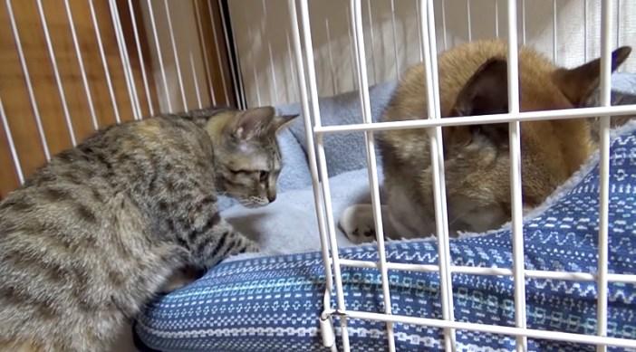 侵入する子猫